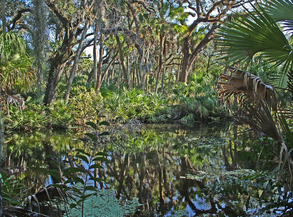 backwaters by cliffordc1