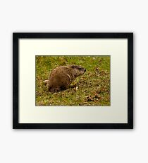 Rodent In The Rain Framed Print
