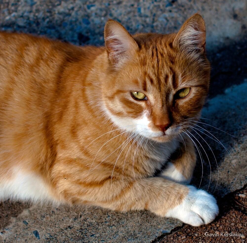 The Orange Cat by Gavin Kerslake