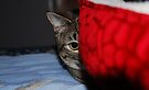 I See You! by jodi payne