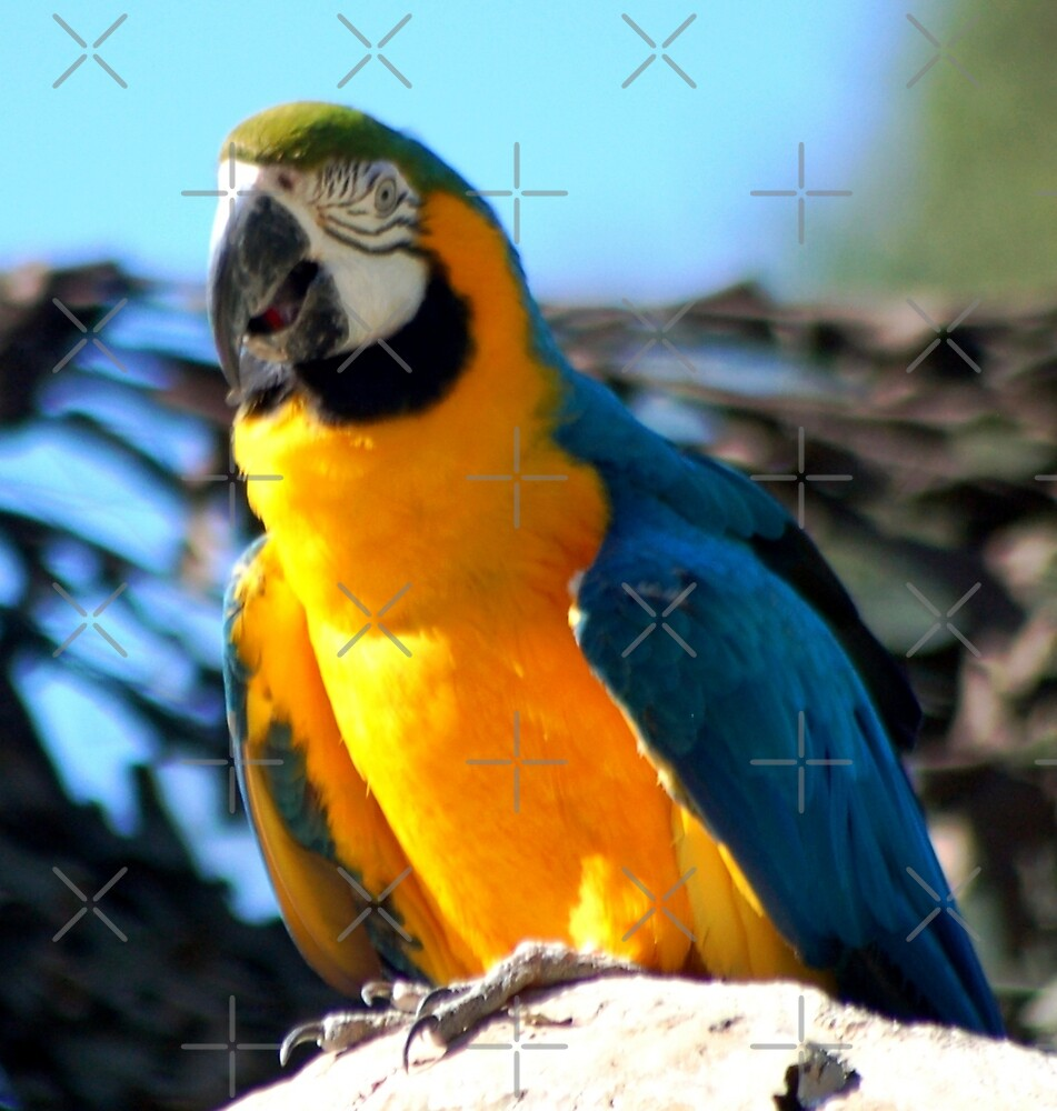 Blue Gold Macaw by loiteke