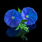 Blue Flowers by Tom Newman