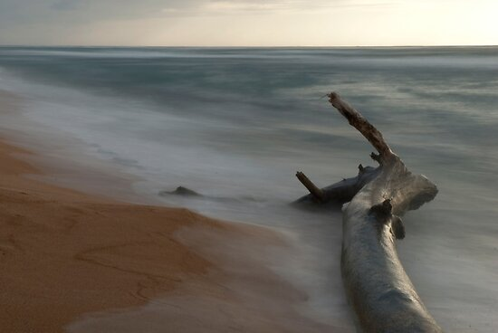 Beached Dead Head by jadennyberg