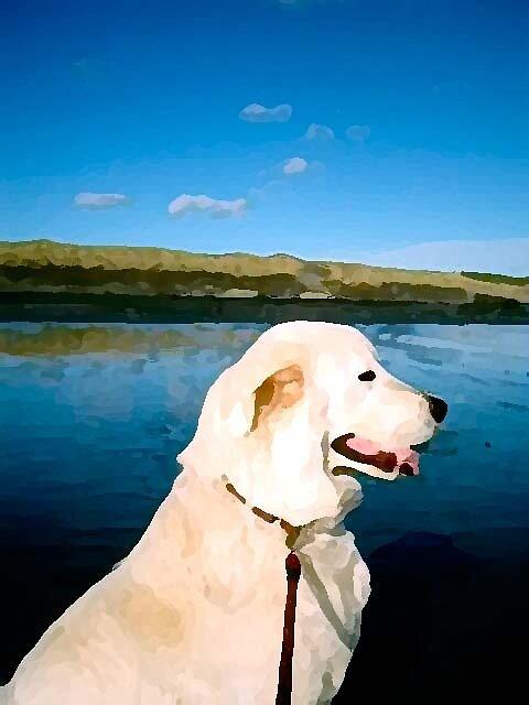 Angel my marama sheep dog at the beach by francesca47