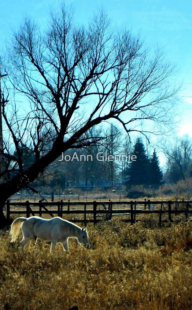 White Horse by JoAnn Glennie