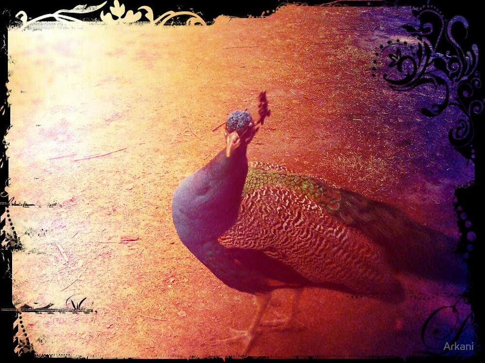 Peacock by Arkani