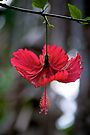 Red Parasol by Extraordinary Light