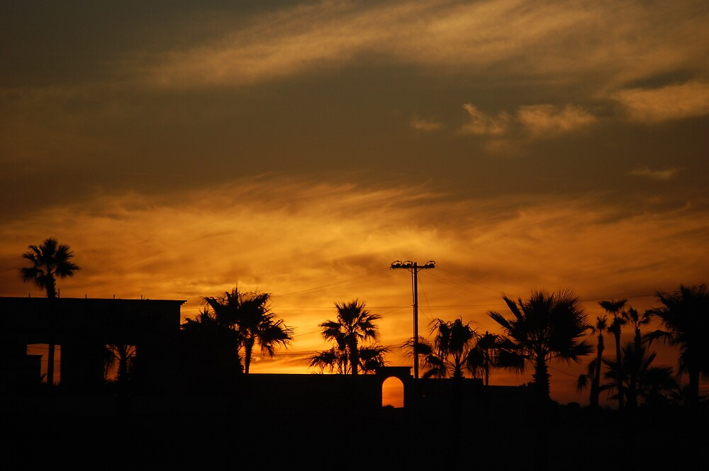 Palm Tree Skyline by idna