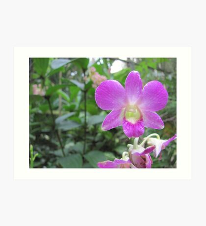 The Top Orchid Art Print