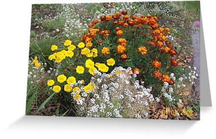 Bright colourful garden flowers by Joseph Green