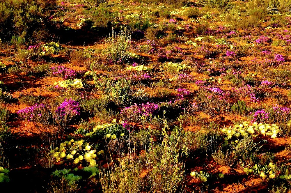 Namaqualand beauty by supergold