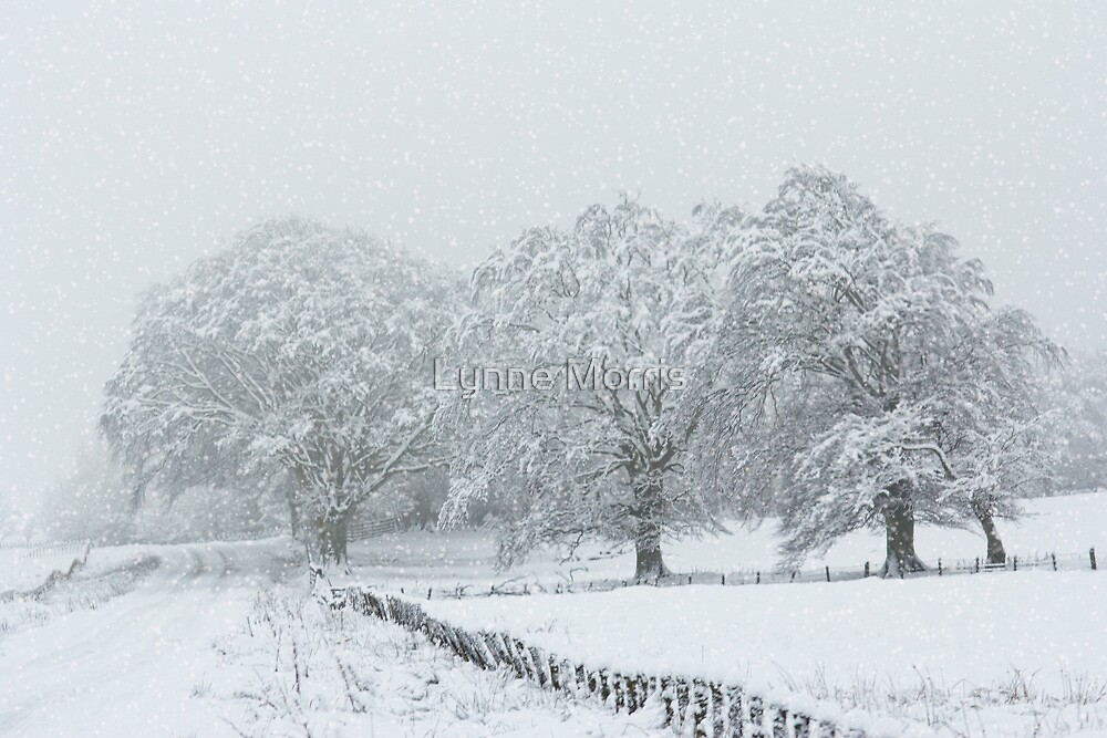 Snow Scene by Lynne Morris