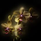Orchid Dream by EbyArts