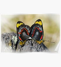 Jezabel Butterfies Mating Poster