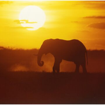 Elephant at Sunset by AStevensAdmin