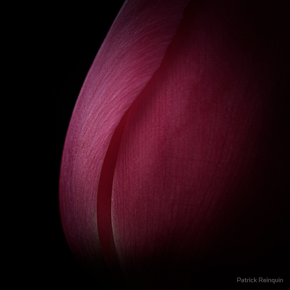 Beauty in the dark by Patrick Reinquin