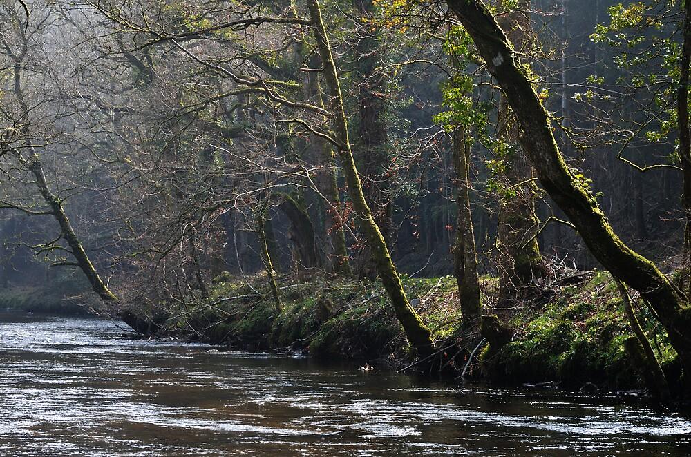 River Teign, Clifford Bridge by jonshort58