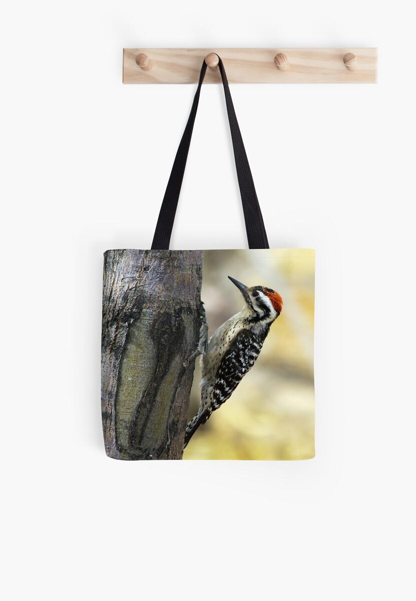 Ladder-backed Woodpecker by Ray Chiarello