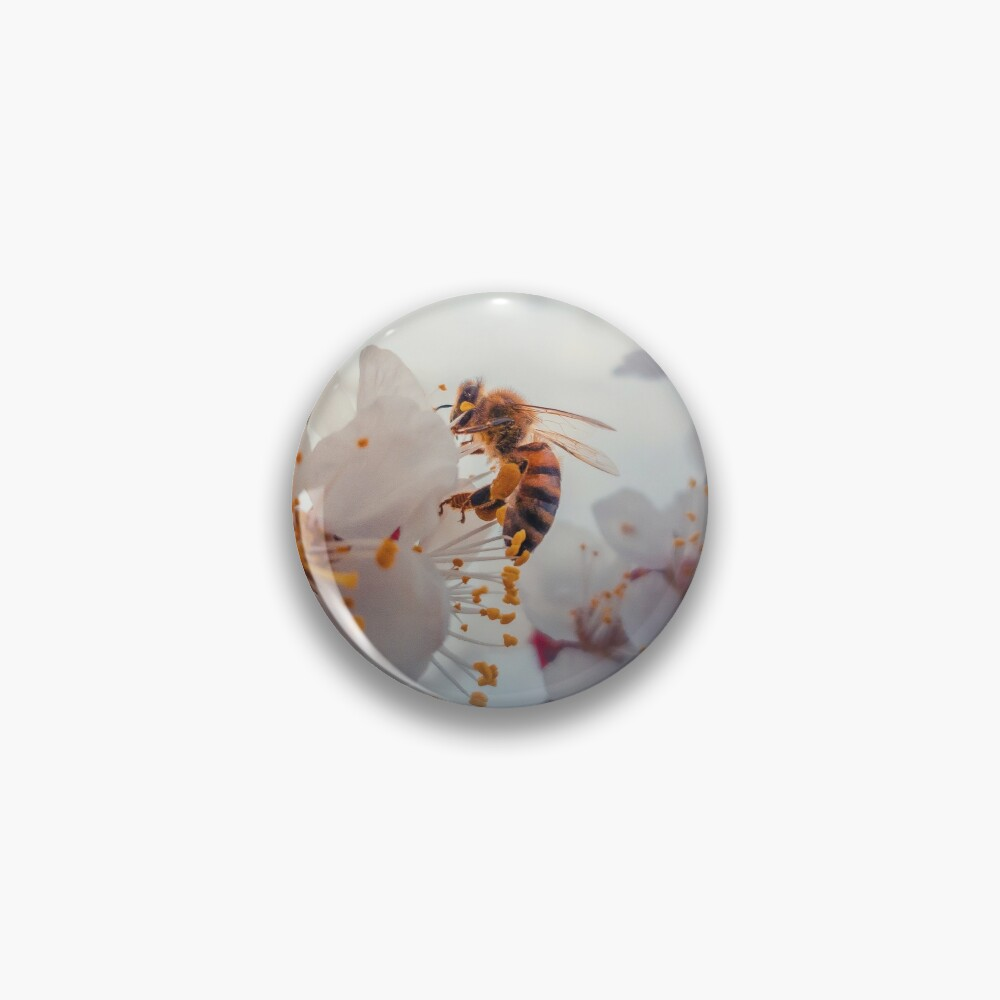 honey bee on apricot flowers Pin