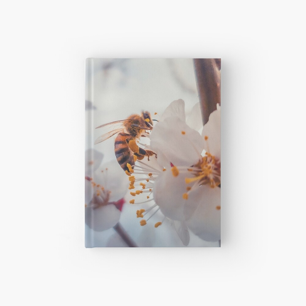 honey bee on apricot flowers Hardcover Journal