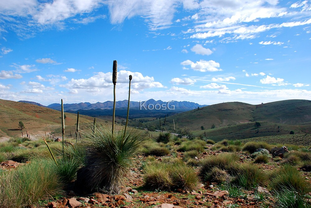 Landscape Flinders Ranges South Australia by KoosG