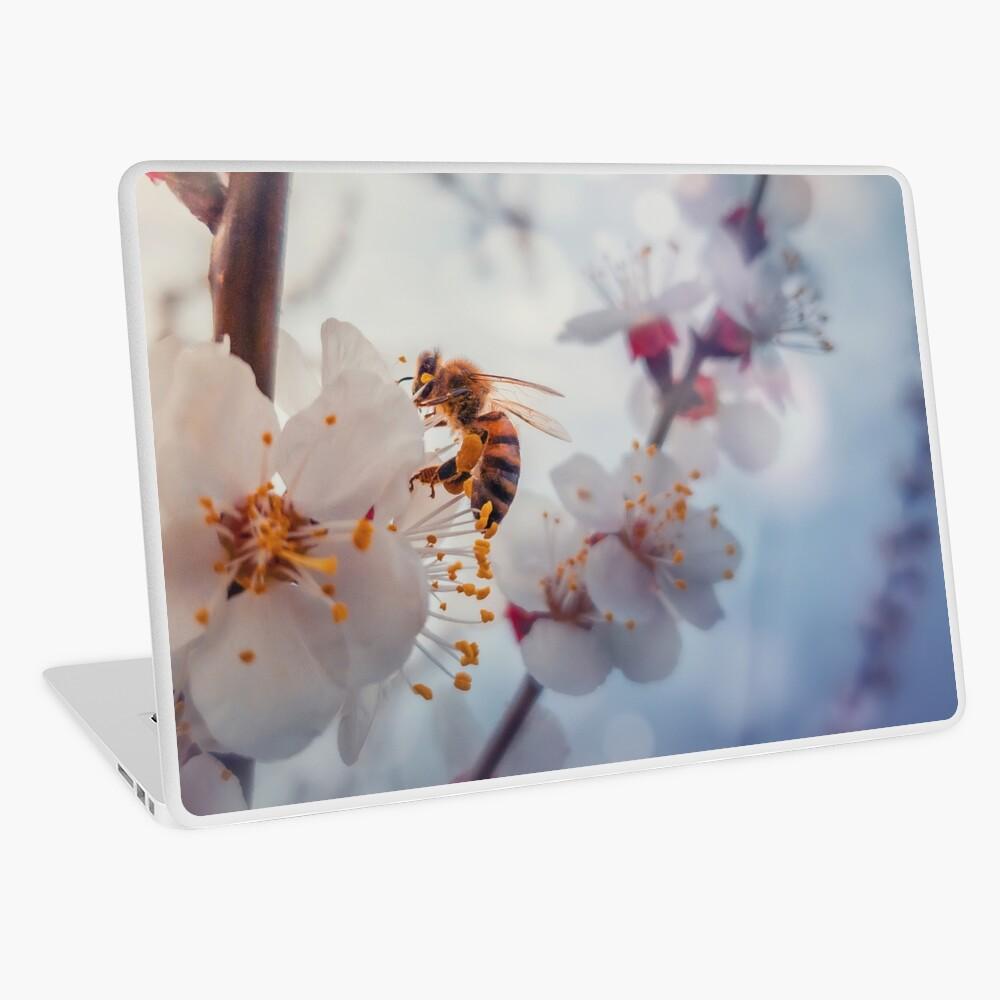 honey bee on apricot flowers Laptop Skin
