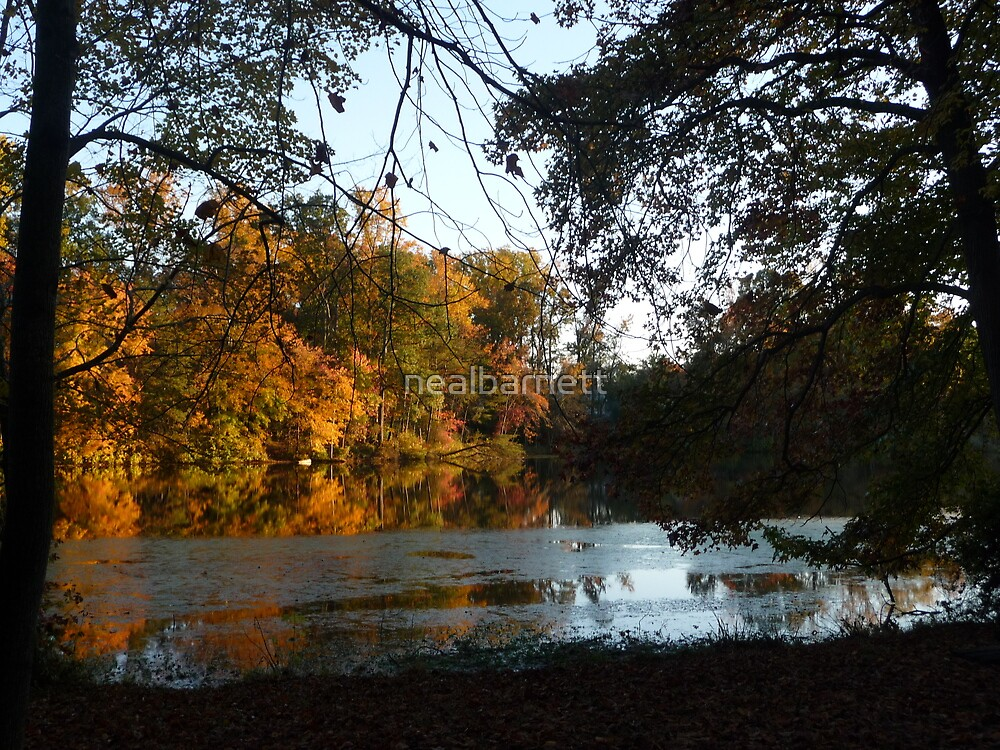 Autumn on Greenbelt Lake 6 by nealbarnett