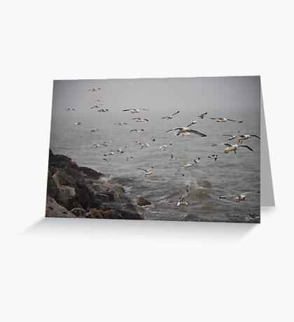 A flock of Seagulls feeding Greeting Card