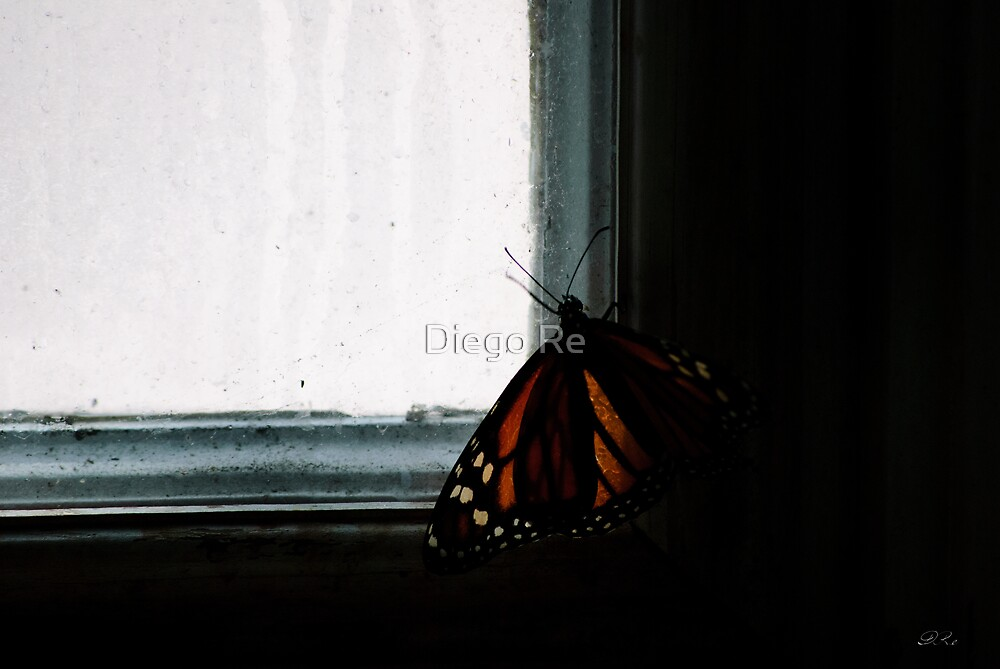 Butterfly In The Dark by Diego Re