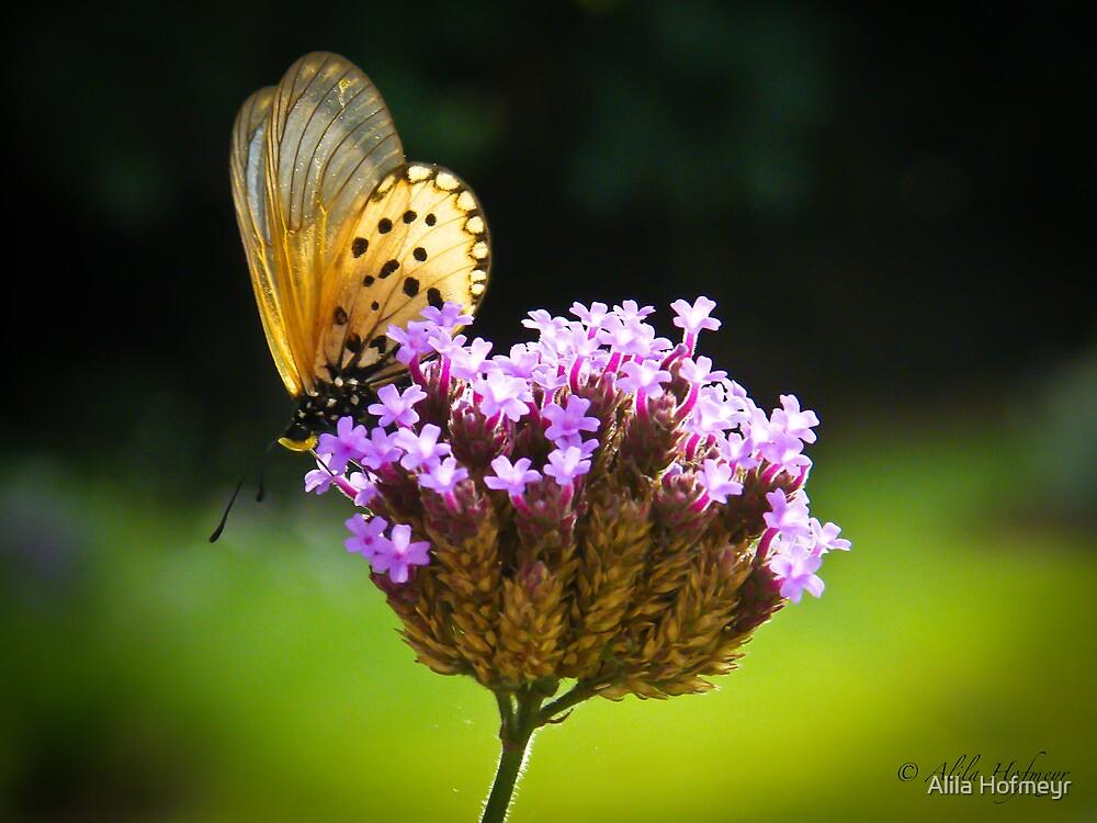 flutterby by Alila Hofmeyr