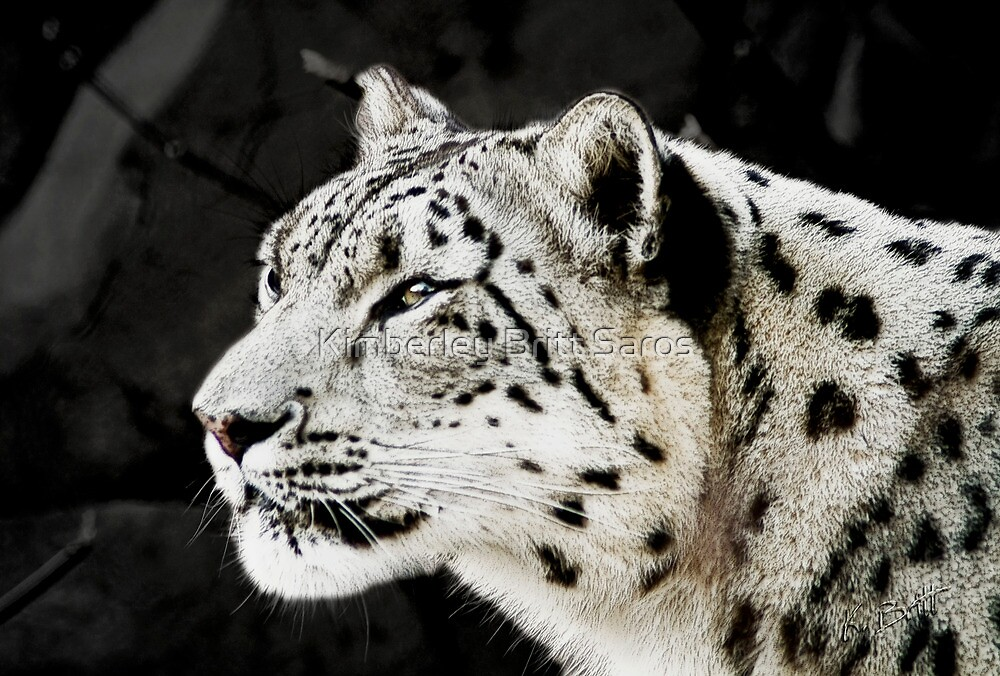 Snow Leopard by KBritt
