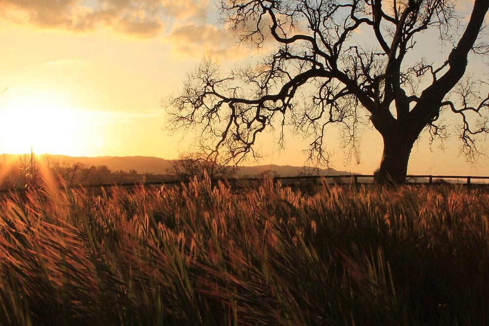 Fall Oak Sunset by JessicaDianne