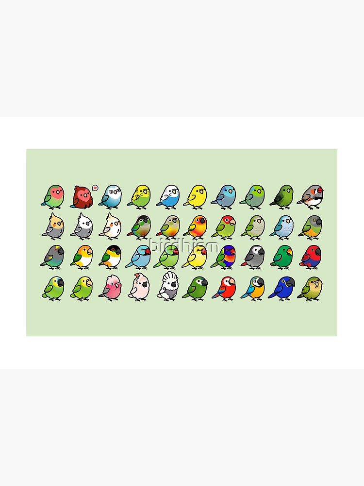Everybirdy Collection by birdhism