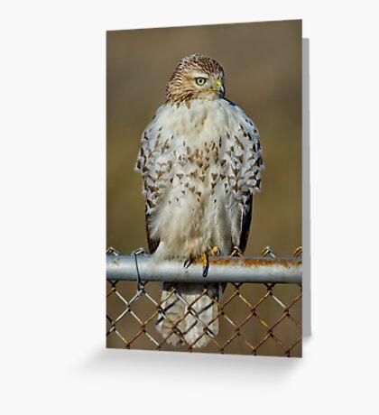 Hawk on fence Greeting Card