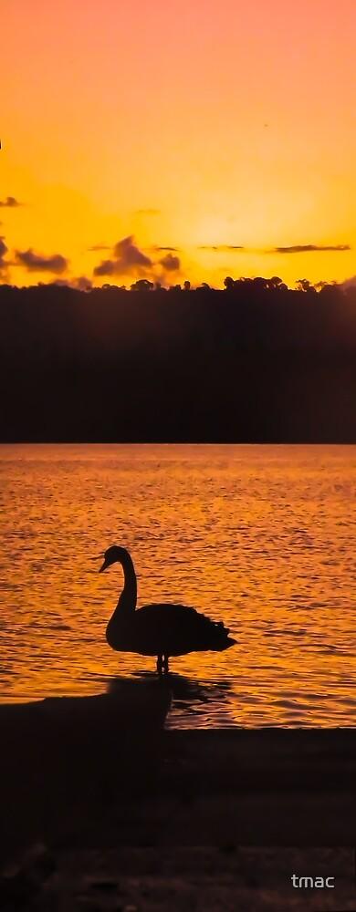 Sunset On Swan Lake (Fiery) by tmac