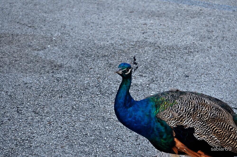 The Peacock by sabiar69