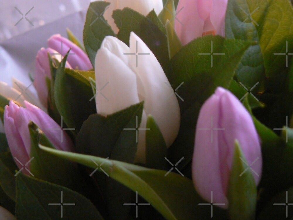 my TuLips- winter's spring  by LisaBeth