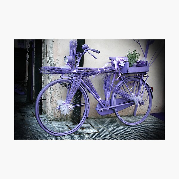 Lavender bicycle Photographic Print