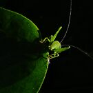 Bug Silhouette by Gabrielle  Lees
