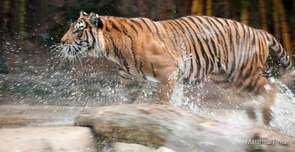 Tiger Strike by Matthew Price