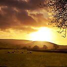 Golden Sheep by sammythor