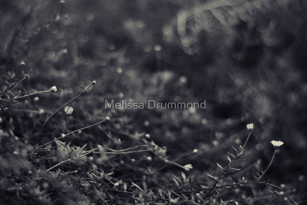 Undergrowth by Melissa Drummond