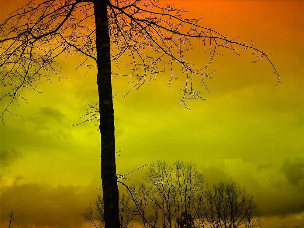 Bald Tree by saripin