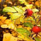 Autumn berries. by Janne Keinänen