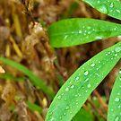 Drops on green. by Janne Keinänen