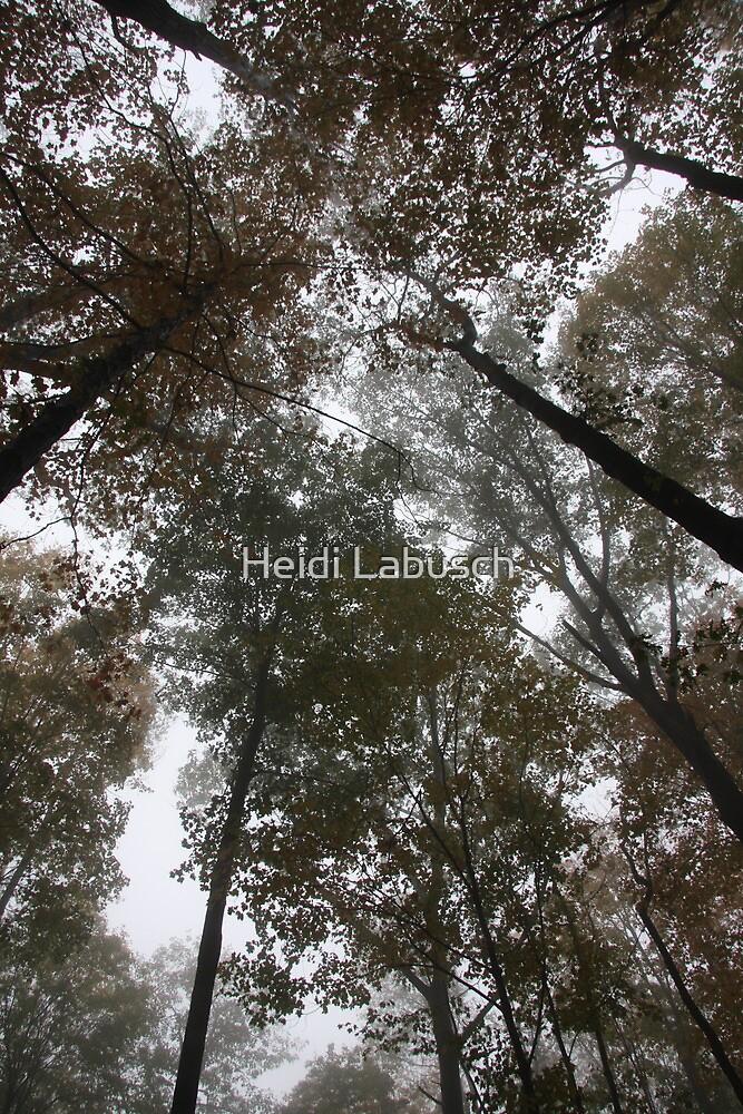 Tree Tops by Heidi Labusch