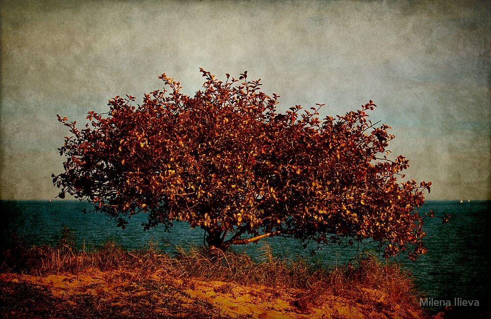 on the Edge by Milena Ilieva