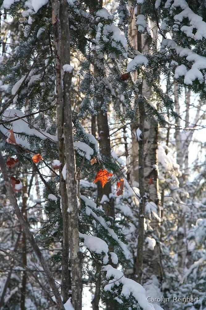 Winter Autumn Muskoka by Carolyn  Reinhart