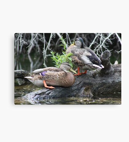 The Grey Pair Canvas Print