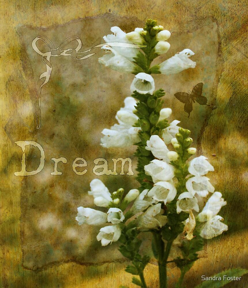 Dream! by Sandra Foster